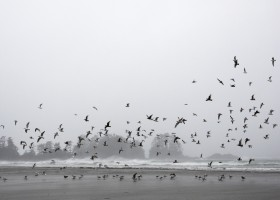Seagulls flocked over Chesterman Beach during the wind storm that swept through Tofino, on Jan. 5, 2021.